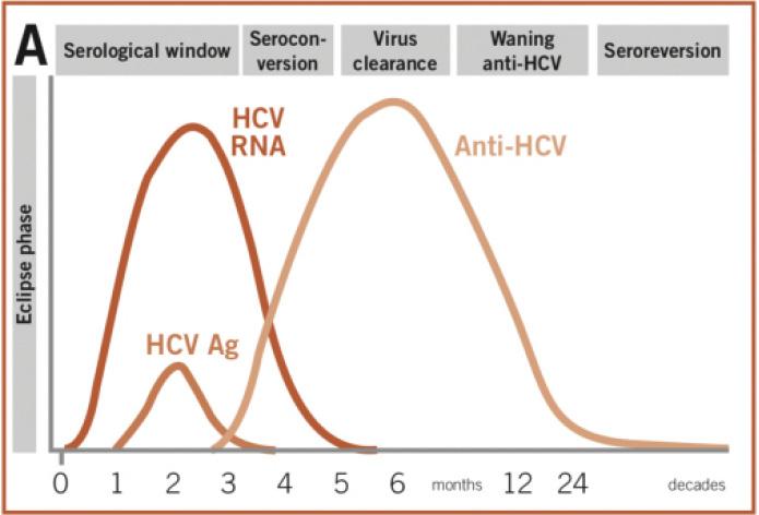 7 Ways Hepatitis C Affects Women Differently than Men | Hepatitis Central
